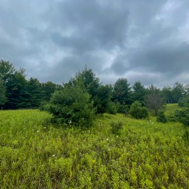 Property Search - Wildlife Realty